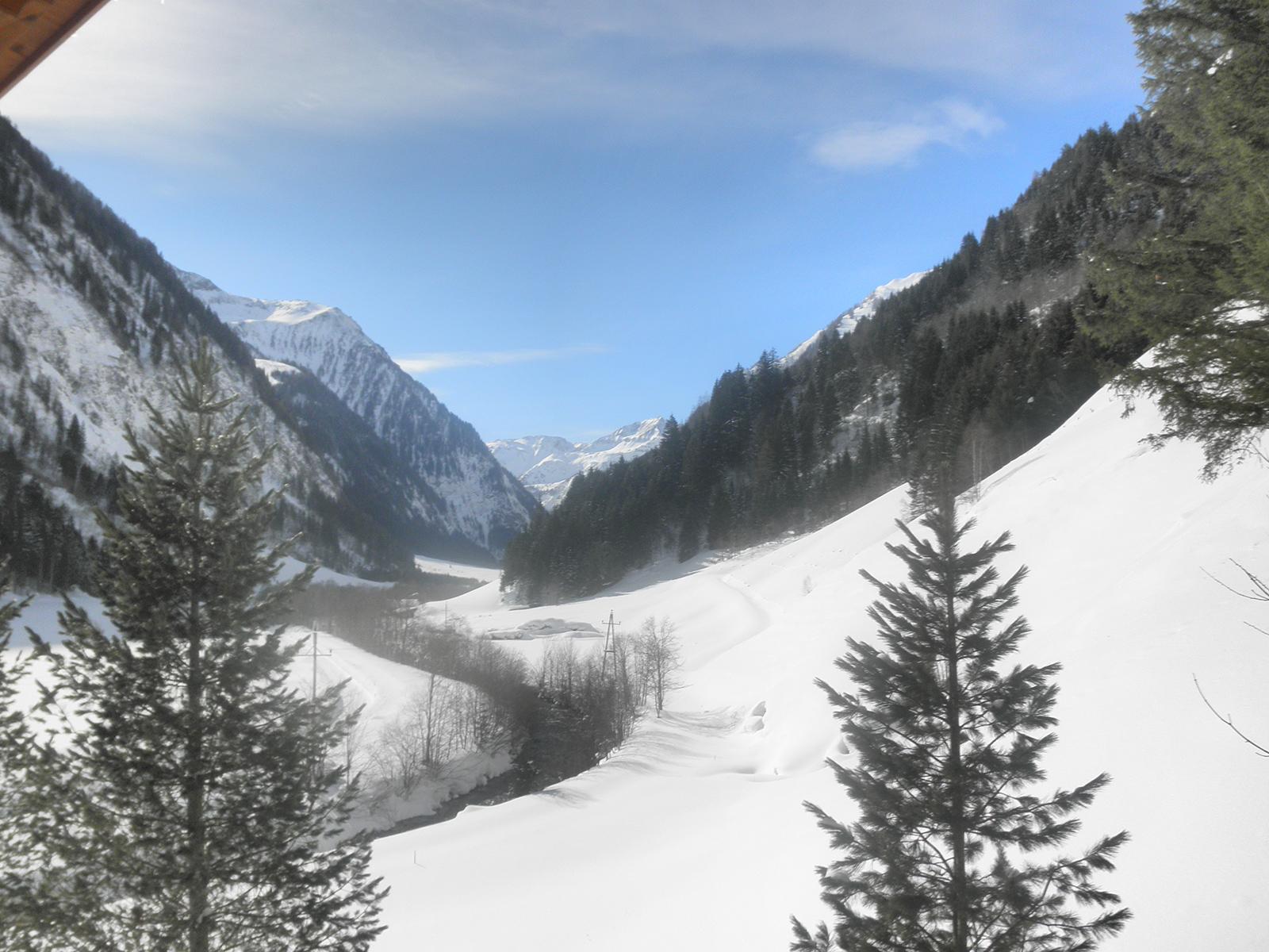 Winter Edwein