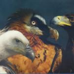 Krumltal – Das Tal der Geier