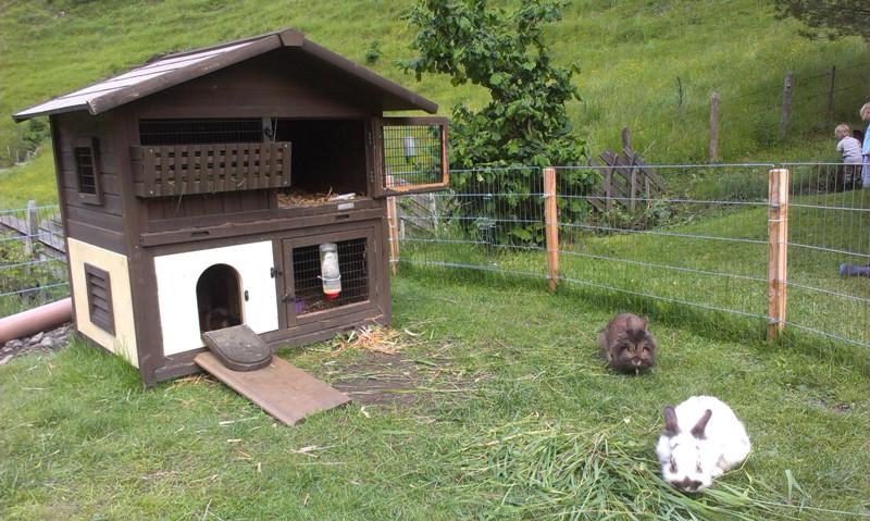 hasen und meerschweinchen haus voglbach. Black Bedroom Furniture Sets. Home Design Ideas